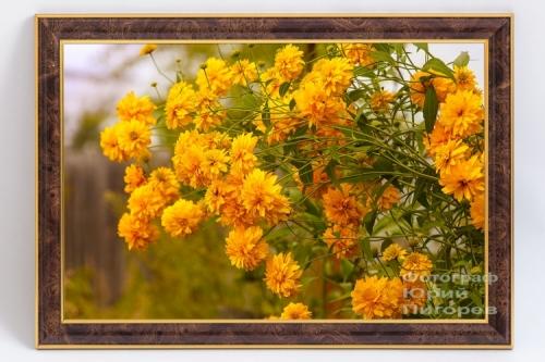 Продаётся фотокартина с цветами